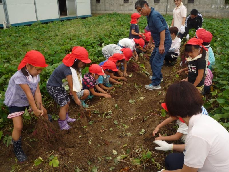 【ライオンズ奉仕デー】園児による芋掘り体験