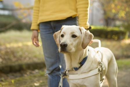 みんなの手で育成され成長し活躍する盲導犬